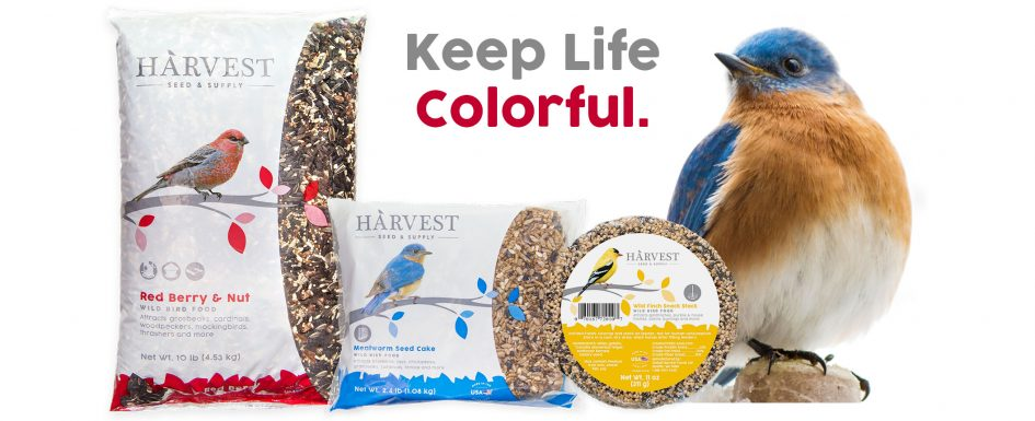 Red Berry and Nut seed blend, Mealworm Seed Cake, and Wild Finch Snack Stacker. Featured with an Eastern Bluebird.