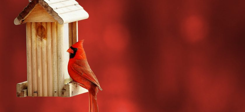 A cardinal perches on a wooden bird feeder against a blurred red background.