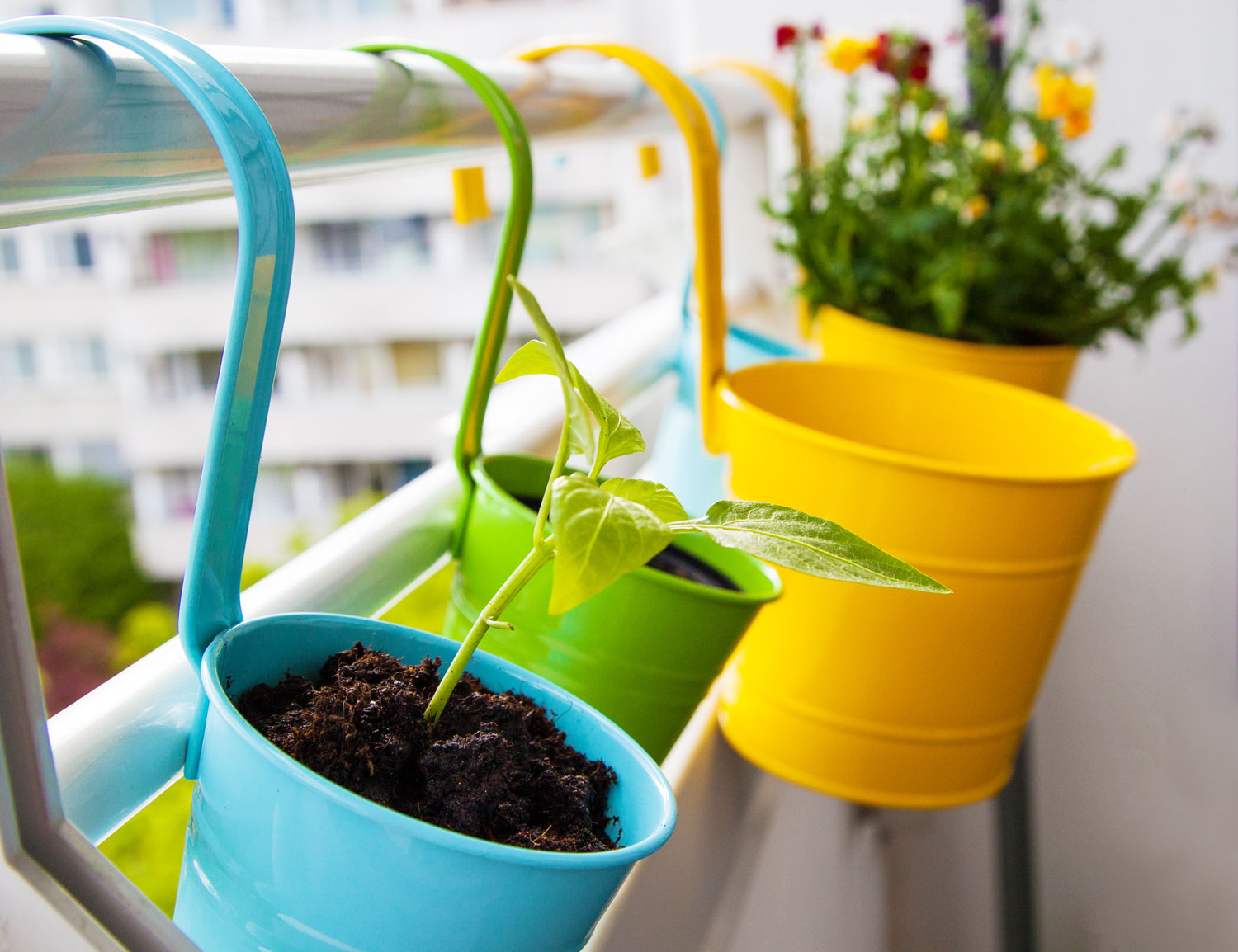 Even small spaces can be cozy niches for nature. Bright blue, green, and yellow planters hang on an urban balcony railing with colorful plants growing in them.